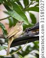 鸟儿 鸟 自然 31585027