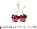 American Cherry 31585199