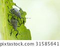 Image of insect on a green leaf. Bug 31585641