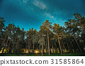 Green Trees Woods In Park Under Night Starry Sky 31585864