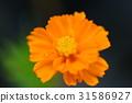 flower, flowers, bloom 31586927
