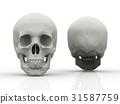 human, skull, face 31587759