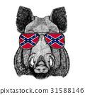 Aper, boar, hog, hog, wild boar wearing glasses 31588146
