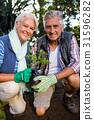 Garden, Gardener, Potted 31596282