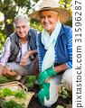 Garden, Gardener, Vegetable 31596287