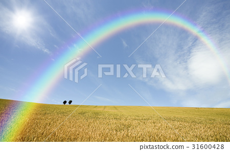 보리밭과 나무와 구름과 무지개와 태양 31600428