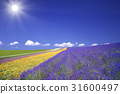薰衣草田和雲和太陽 31600497