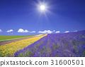 薰衣草田和雲和太陽 31600501