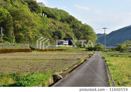 One train 31600559