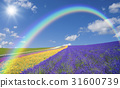 Lavender field and clouds, rainbow and sun 31600739