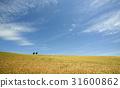 小麥 小麥地 雲彩 31600862