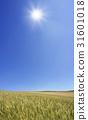 밀, 보리, 태양 31601018