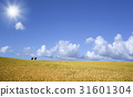 보리밭과 나무와 구름과 태양 31601304