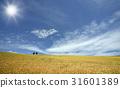 小麥 小麥地 雲彩 31601389