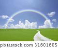 rainbow, hill, spring 31601605