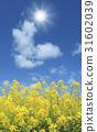 强奸鲜花和太阳 31602039