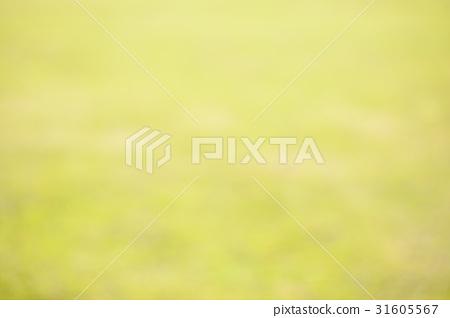 잔디 31605567