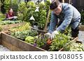 Adult Farmer Man Planting Vegetable with Shovel 31608055