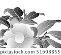 花朵 花卉 花 31608855