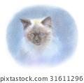 喜馬拉雅小貓 31611296