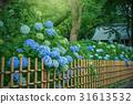 绣球花在花园里 31613532