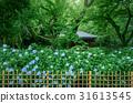 绣球花在花园里 31613545