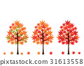 red leafe maple 31613558