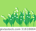 lily of the 31616664