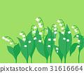 铃兰 花朵 花卉 31616664