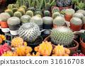 cactus plant desert 31616708