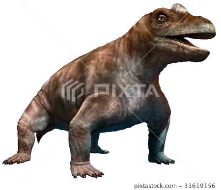 keratocephalus 31619156