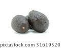 Avocado 31619520