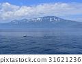 killer, whale, orca 31621236