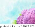 식물, 파란색, 꽃 31621921