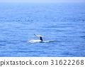 바다, 범고래, 잠수 31622268