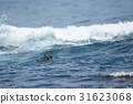 海獭 海洋 海 31623068