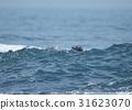 海獭 海洋 海 31623070