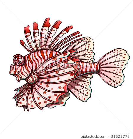 Loinfish colorfull on a white background 31623775