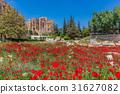 Poppy field romans ruins Baalbek Beeka Lebanon 31627082