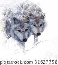 Two wolves watercolor 31627758