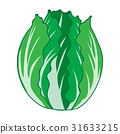 Chinese cabbage solated illustration 31633215