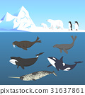 Vector set of animals living in a cold climate. 31637861