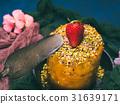 蛋糕 焦糖 開心果 31639171
