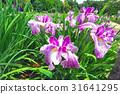 風景 植物 植物學 31641295