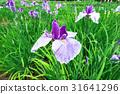 風景 植物 植物學 31641296