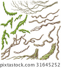 Liana Branches Sketch 31645252