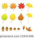 잎, 은행나무무, 단풍 나무 31645466