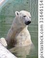 백곰, 흰 곰, 북극곰 31646154