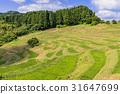 Ōyama Rice Terrace, senmaida, terraced rice-fields 31647699