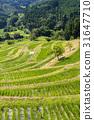 Ōyama Rice Terrace, senmaida, terraced rice-fields 31647710